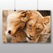 Big Box Art Cuddling Lions No.2 Photographic Print Wrapped on Canvas