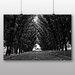 Big Box Art 'Black and White Woodland Street' Photographic Print