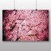 Big Box Art 'Japanese Cherry Blossom Tree Pink No.1' Graphic Art