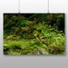 Big Box Art Moss on Forest Floor Photographic Print Wrapped on Canvas