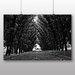 Big Box Art Tree Lined Road Photographic Print on Canvas