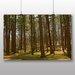 Big Box Art Woodland Park Photographic Print on Canvas