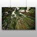 Big Box Art Woodland Forest Sky Photographic Print