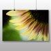 Big Box Art Yellow Sunflower Flower No.1 Photographic Print