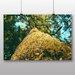 Big Box Art 'Moss on the Tree' Photographic Print