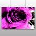 Big Box Art Purple Rose Photographic Print