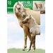 Imagicom Foal Wall Sticker