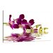 Urban Designs Orchid Photographic Print Wrapped on Canvas