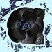 Fluorescent Palace Petal Pusher Black Graphic Art on Canvas