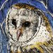 AnnabelLangrish Barn Owl by Annabel Langrish Graphic Art