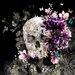 Atelier Contemporain Altesse by Iris Graphic Art on Canvas