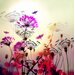 Atelier Contemporain Flower by Iris Graphic Art Wrapped on Canvas