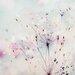 Atelier Contemporain Ombeline by Iris Graphic Art on Canvas