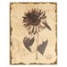 Mario Industries Antiqued Floral Graphic Art on Wrapped Canvas