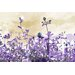 Andrew Lee Flower Purple by Andrew Lee Graphic Art on Canvas