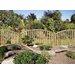 Grange Fencing Gawsworth Trellis