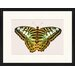 LivCorday Butterfly Series 41 Framed Graphic Art