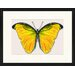 LivCorday Butterfly Series 1 Framed Graphic Art