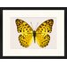 LivCorday Butterfly Series 49 Framed Graphic Art