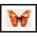 LivCorday Butterfly Series 31 Framed Graphic Art