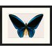 LivCorday Butterfly Series 14 Framed Graphic Art