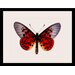 LivCorday Butterfly Series 15 Framed Graphic Art