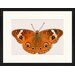 LivCorday Butterfly Series 33 Framed Graphic Art