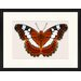 LivCorday Butterfly Series 36 Framed Graphic Art