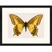 LivCorday Butterfly Series 38 Framed Graphic Art