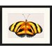 LivCorday Butterfly Series 4 Framed Graphic Art