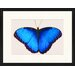 LivCorday Butterfly Series 44 Framed Graphic Art