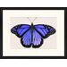 LivCorday Butterfly Series 23 Framed Graphic Art