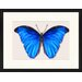 LivCorday Butterfly Series 37 Framed Graphic Art