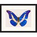 LivCorday Butterfly Series 25 Framed Graphic Art