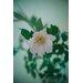 David & David Studio 'Turquoise Flowers 1' by Laurence David Photographic Print