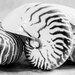 David & David Studio 'Nautilus 3' by Laurence David Framed Photographic Print
