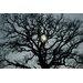 David & David Studio 'Grand Oak' by Philippe David Framed Photographic Print