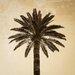 David & David Studio 'Palm Tree 1' by Laurence David Framed Photographic Print