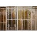 David & David Studio 'Details of Greenhouse 1' by Laurence David Photographic Print on Canvas