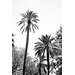 David & David Studio 'Great Palms 2' by Laurence David Framed Photographic Print