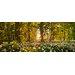 Pro-Art Glasbild Sweet Woodruff, Kunstdruck