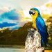 Pro-Art Glasbild Parakeet I, Kunstdruck