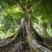 Pro-Art Glasbild Tree Of Life, Kunstdruck