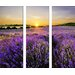 Pro-Art Glasbild Beautiful Lavender, Kunstdruck