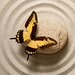 Pro-Art Glasbild Butterfly I, Kunstdruck