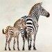"DEInternationalGraphics ""Zèbre et son petit de Ndutu"" von Danielle Beck, Fotodruck"
