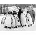 """DEInternationalGraphics """"Pick up a Penguin"""" von Anonym, Fotodruck"""