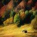 "DEInternationalGraphics ""Nature Art Color II"" von Uwe Steger, Kunstdruck"