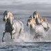 """DEInternationalGraphics Acrylglasbild """"Horses Running at the Beach"""" von Jorge Llovet, Fotodruck"""
