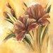 """DEInternationalGraphics """"Fleur brune I"""" von Isabelle Zacher- Finet, Kunstdruck"""